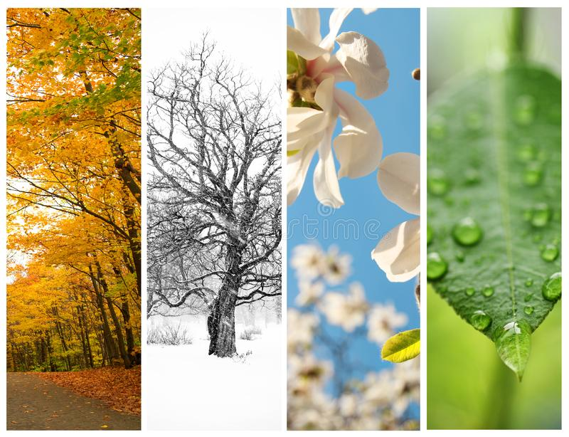 Four seasons in four pictures. Collage of four pictures. one for each season, spring, summer, fall and winter stock photos