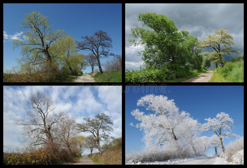 Four seasons landscape. In one photo stock photo