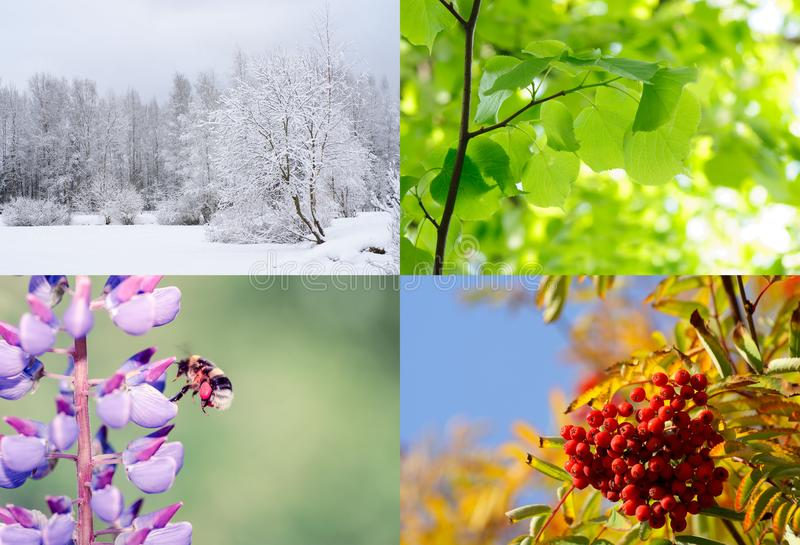 Four seasons. Nature in spring, summer, autumn and winter. Four seasons of year. Nature in spring, summer, autumn and winter stock photo