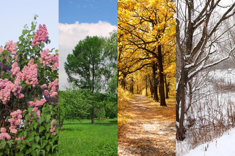 Four seasons spring, summer, autumn, winter. Trees collage stock image
