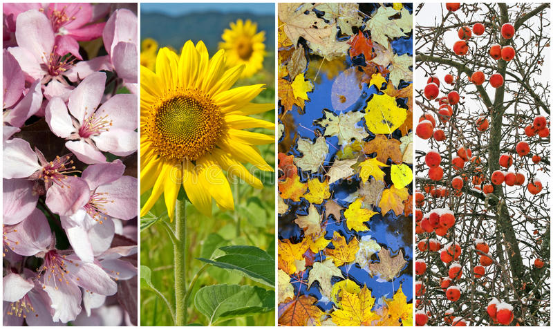 Four seasons. Spring, summer, autumn, winter. Four seasons. Nature in spring, summer, autumn and winter royalty free stock images