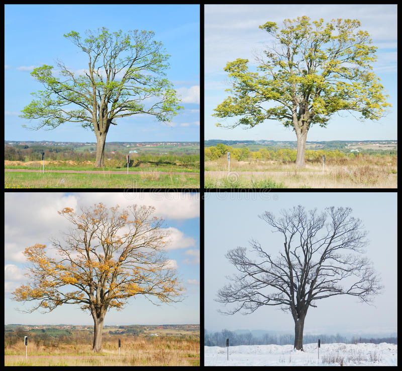 Free Four Seasons Tree Stock Photos - 14121803