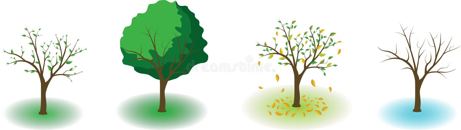 Four seasons. Tree shows the four seasons of the year stock illustration