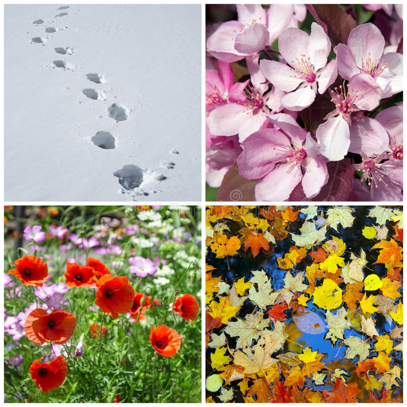 Four seasons. Winter, spring, summer, autumn. Four seasons. Nature in winter, spring, summer and autumn royalty free stock images