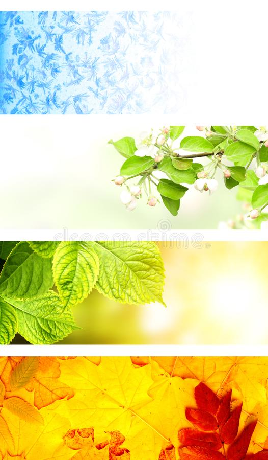 Four seasons of year royalty free stock images