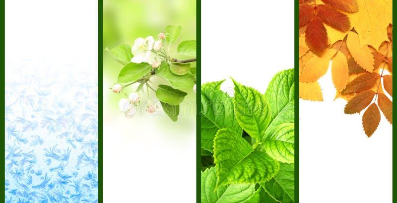 Four seasons of year vector illustration