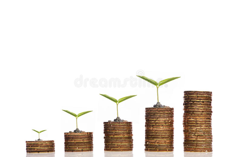 Four Seed on golden coin over white background. Financial Growth Investment concept,Only four Seed on golden coin over white background stock photography