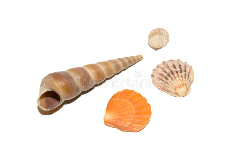 Four shells of different sizes and shapes. stock photos