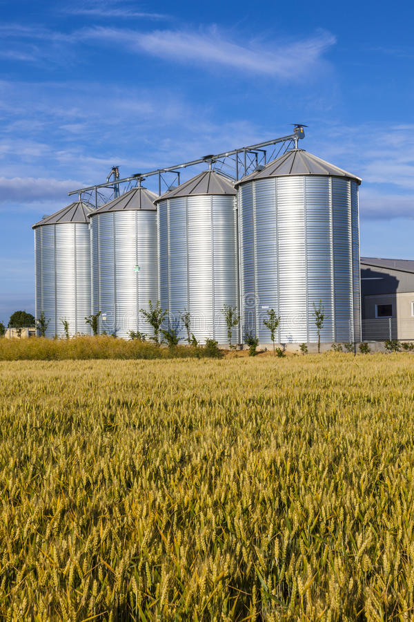Four silver silos in corn field. Under blue sky royalty free stock image