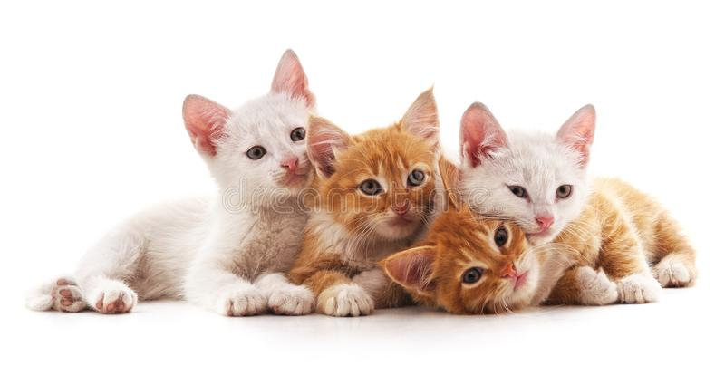 Four small cats. stock photo