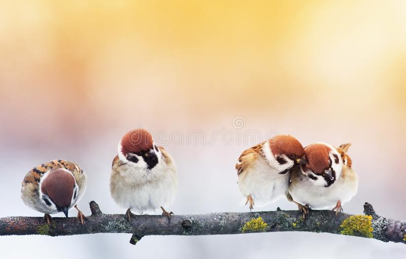 Four small funny baby birds Sparrow sitting on a branch in the g. Arden and look hungry waiting for parents stock photo