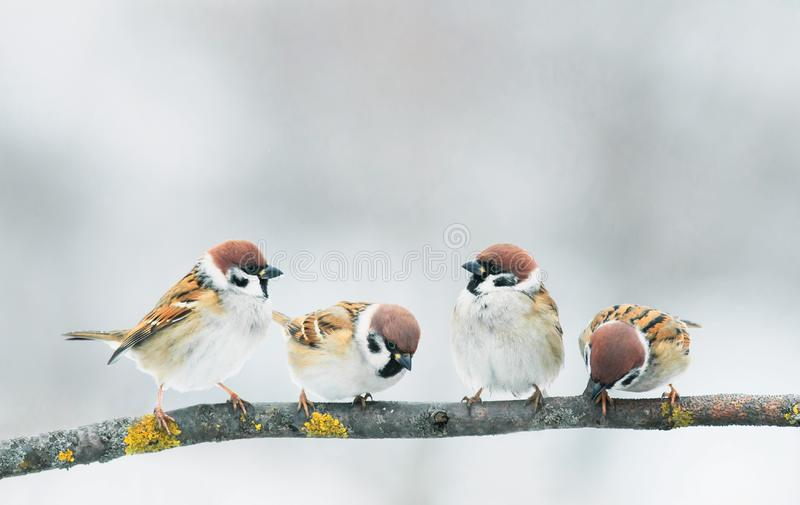 Small funny baby birds Sparrow sitting on a branch in the garde royalty free stock photos