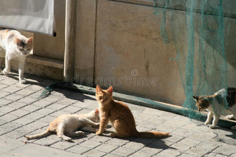 Four stray cats playing on a shabby street stock images
