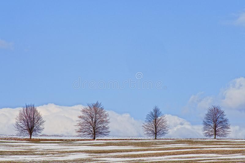 Four trees in early spring in a snow covered field stock photos