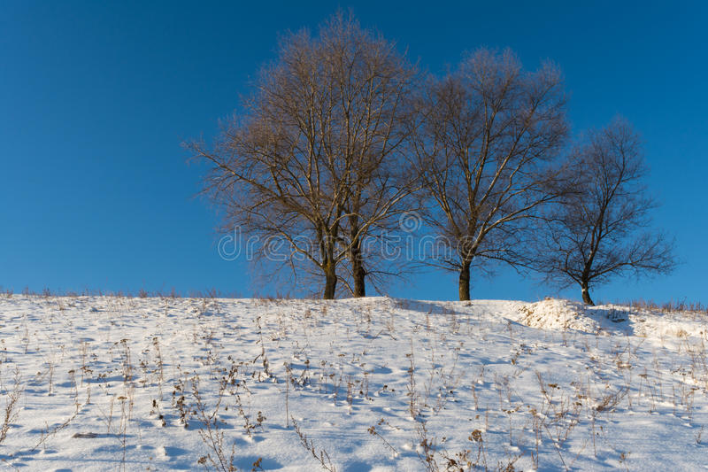 Four trees growing on a snowy hill stock photography