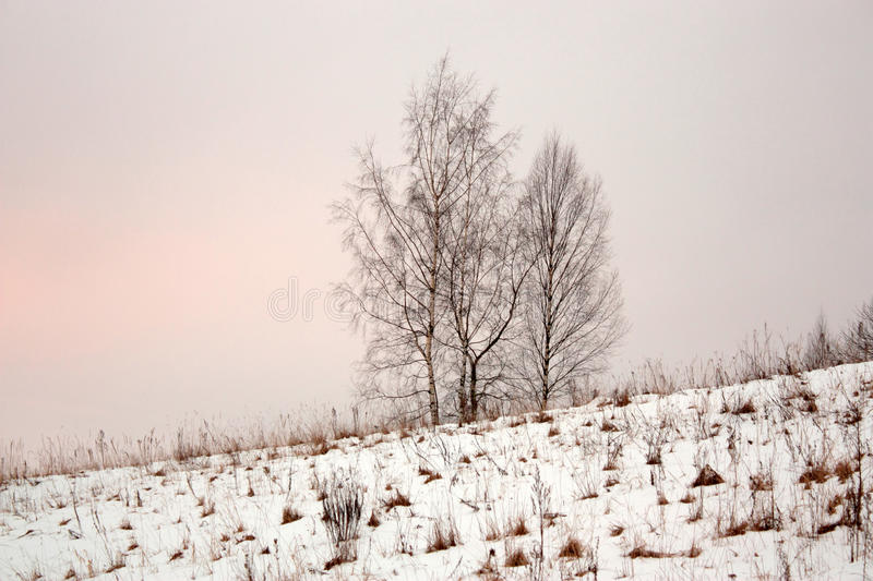 Four trees in snowdrifts on hill royalty free stock images