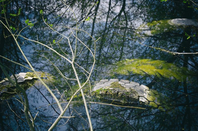 Four used tires illegally flooded in a forest pond stock images