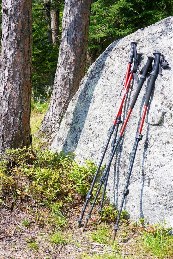 Pair of walking sticks cozied up together. Four walking sticks rest on a granite boulder in the Adirondacks while the husband and wife owners take a well royalty free stock photography