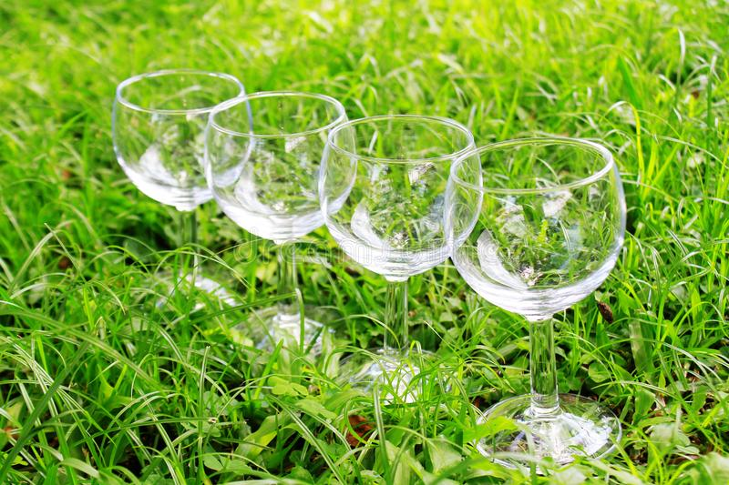 Four wine glasses in the grass. A row of sparkling wine glasses sitting in the grass in the afternoon sun stock photo