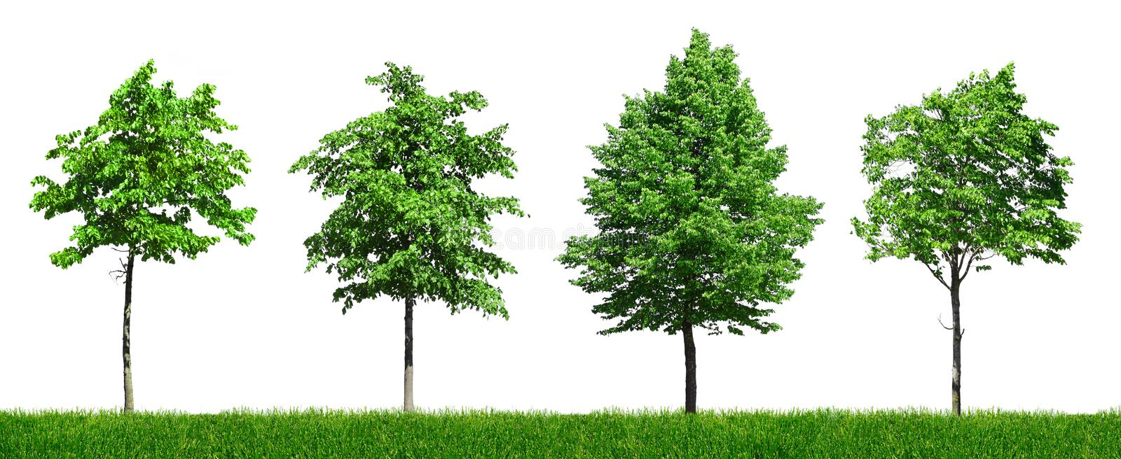 Download Four Young Green Trees Royalty Free Stock Images - Image: 15028189