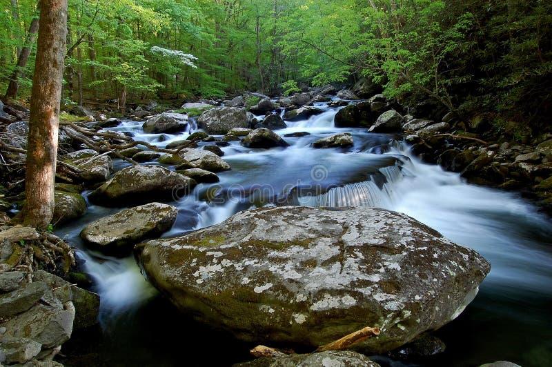 Fourche moyenne de la petite rivière, Great Smoky Mountains images libres de droits