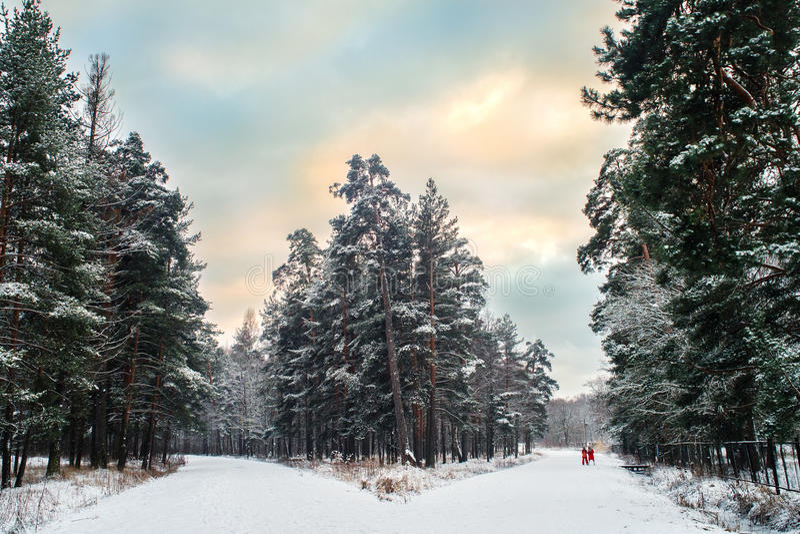 Fourchette sur un chemin forestier photographie stock libre de droits