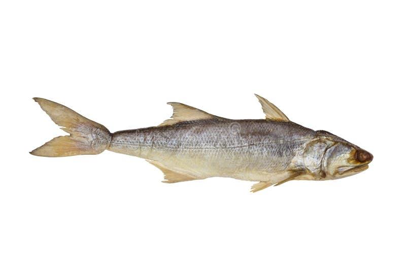 Fourfinger threadfin droge die vissen op witte achtergrond, gezouten vissen worden geïsoleerd stock afbeelding