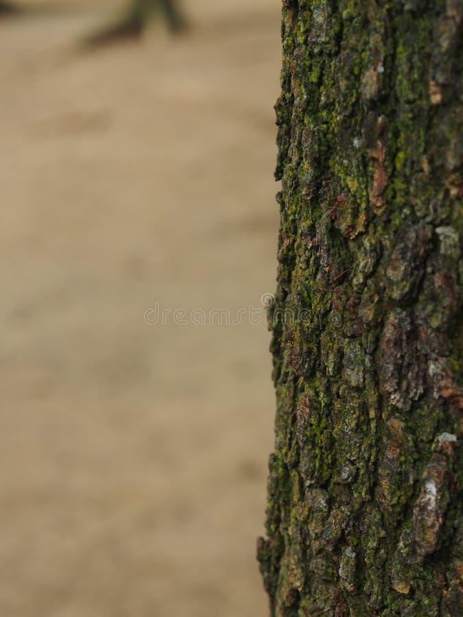 fourmi photographie stock