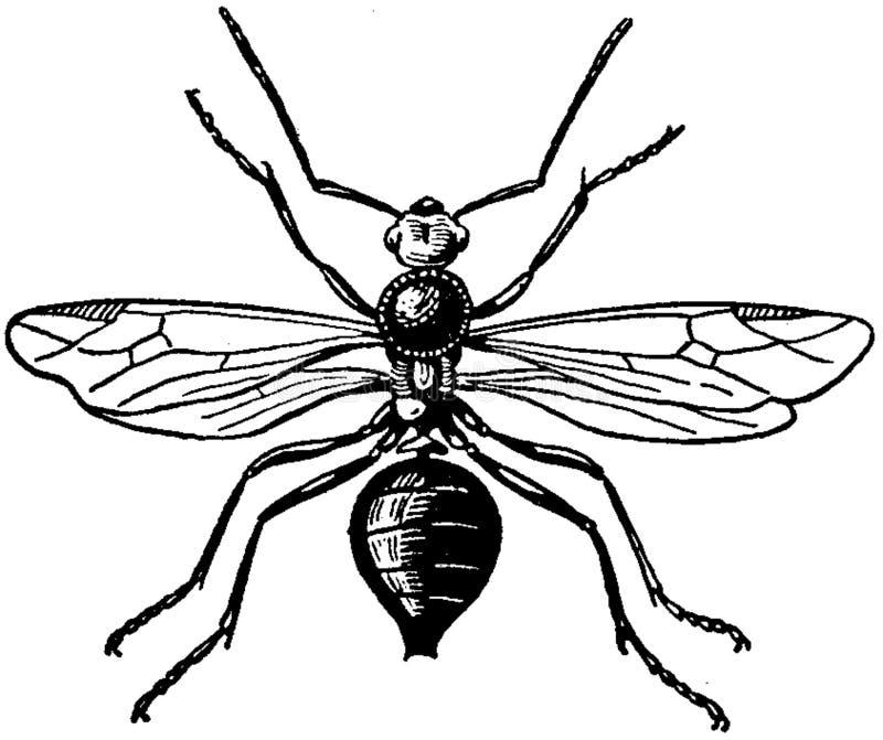 Fourmi Rousse-mâle Free Public Domain Cc0 Image