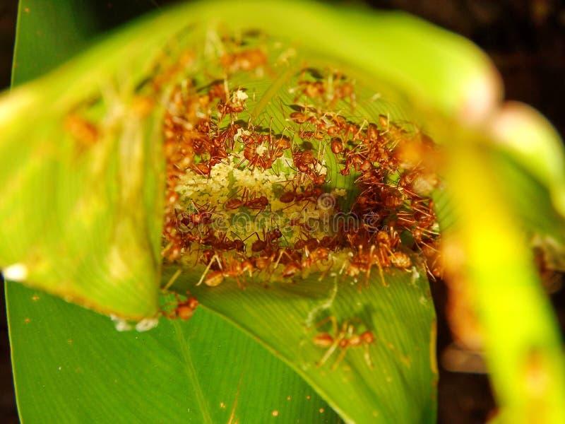 Fourmis dans le nid photo libre de droits