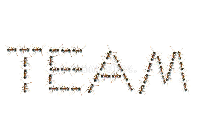 Fourmis en texte d'équipe images stock