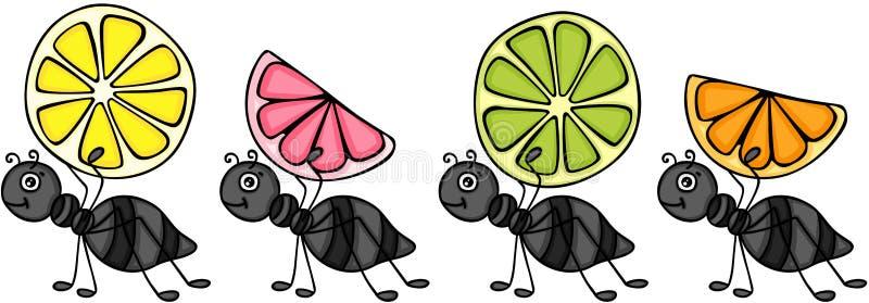 Fourmis portant des tranches d'agrumes illustration stock