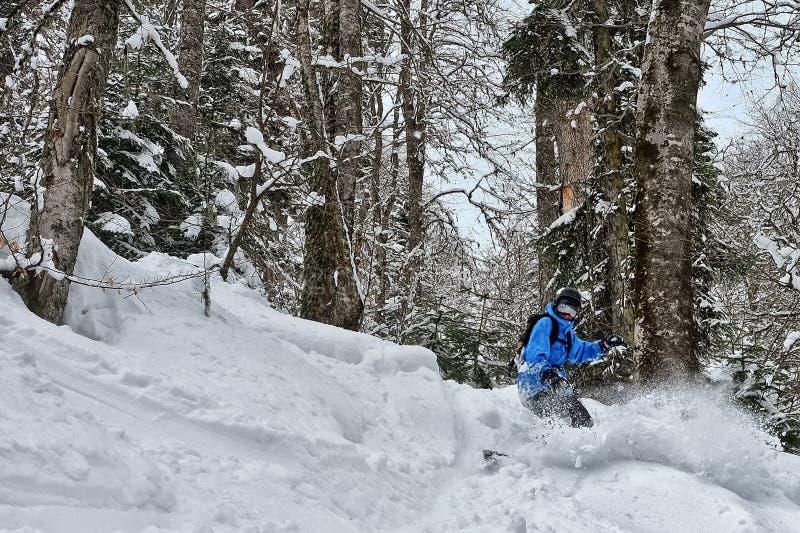 Fourrure-arbres sous une neige photos stock