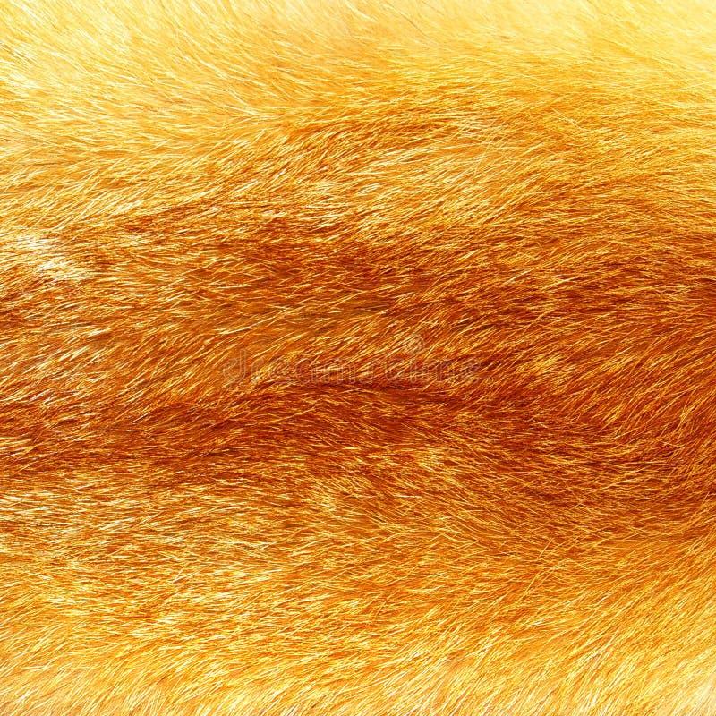 Fourrure de Fox photographie stock