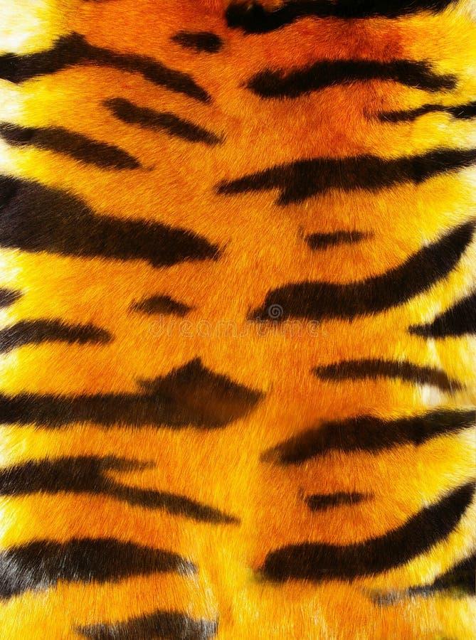 Fourrure de tigre image libre de droits