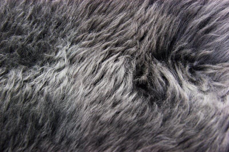 Fourrure grise image libre de droits