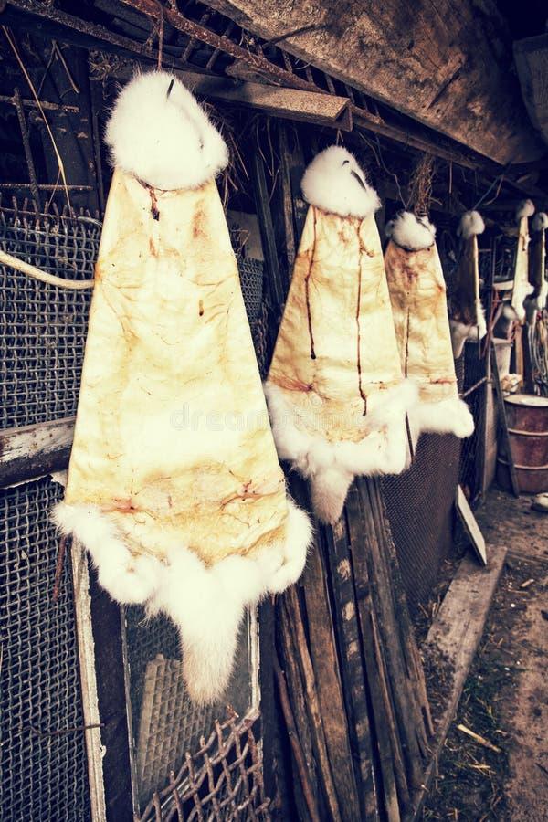 Fourrures de lapin accrochant sur les crochets dans la ferme, rétro filtre de photo photo libre de droits