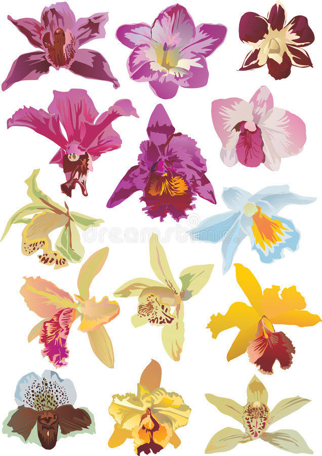Fourteen orchids collection royalty free illustration