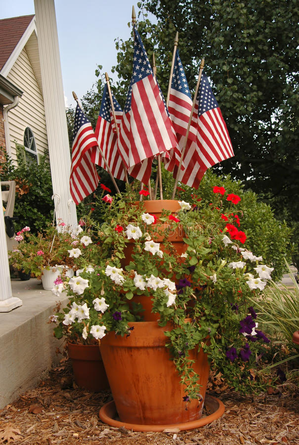Download Fourth of July Plant stock image. Image of petunia, plant - 23578925