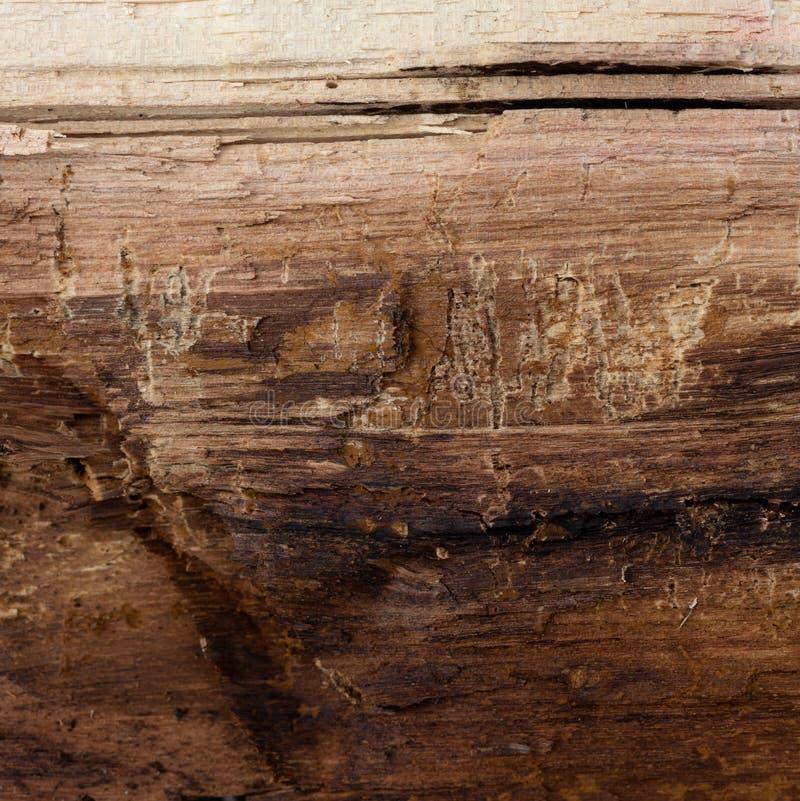 Fouten en kleine barsten in het logboek, textuur voor de achtergrond royalty-vrije stock afbeelding
