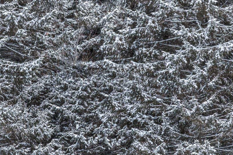 Foutloos tileable sneeuw nette textuur stock afbeeldingen