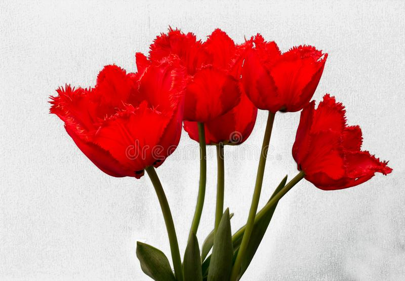 Fowers, красные тюльпаны стоковое фото rf
