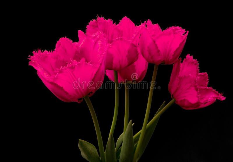 Fowers, розовые тюльпаны стоковое изображение rf