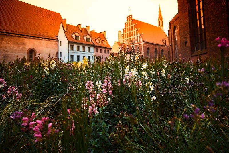 Fowers e costruzioni variopinte con la chiesa luterana del ` s di St John nella vecchia città di Riga alla via di Skarnu a Riga,  immagine stock