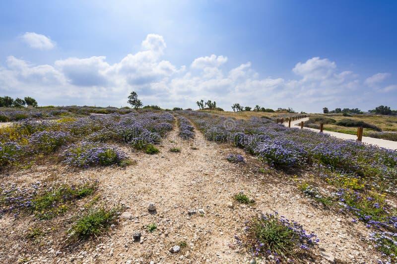 Fowers en parc israélien d'Apollonia photographie stock