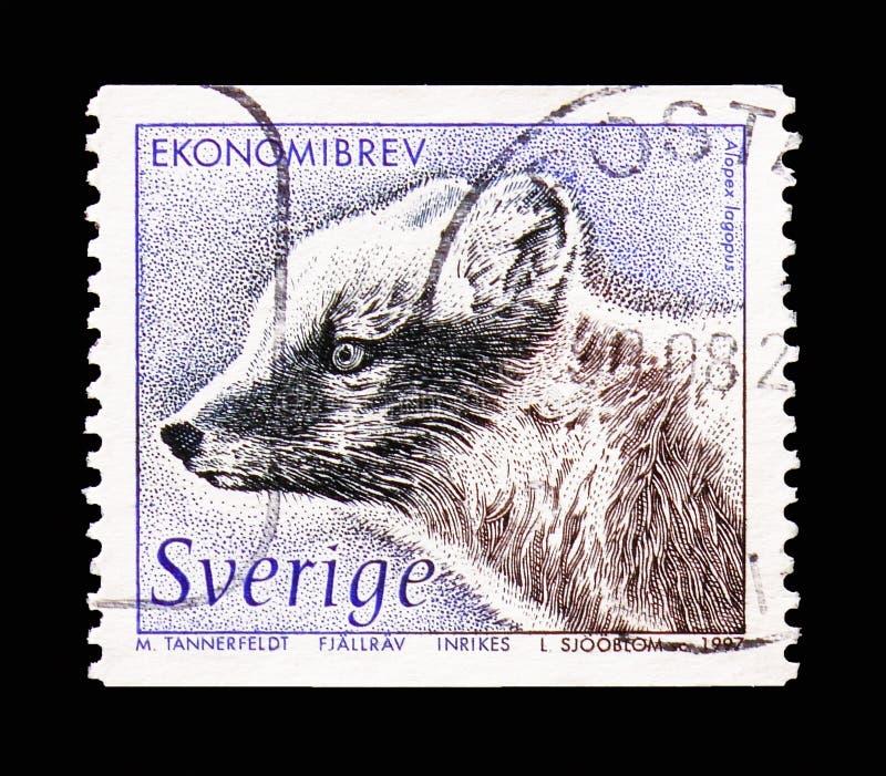 Fox arctique (lagopus d'Alopex), serie de faune, vers 1997 photos libres de droits