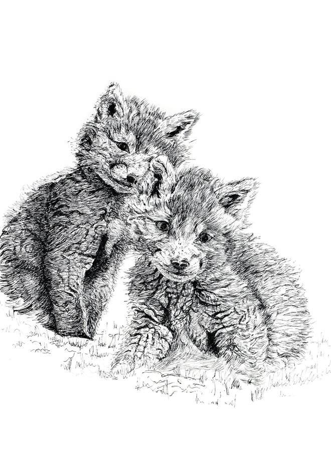Fox Cubs do bebê ilustração royalty free