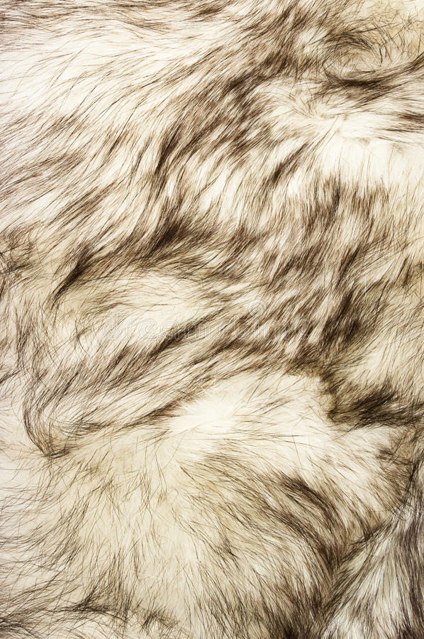 Fox fur texture. For background stock images