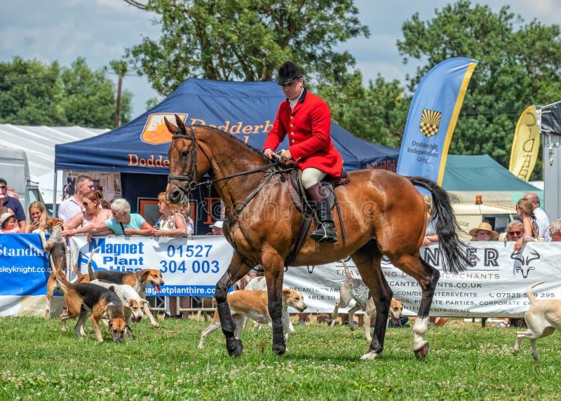 Fox-hounds de Worcestershire à l'exposition de campagne de Hanbury, Worcestershire, Angleterre images stock