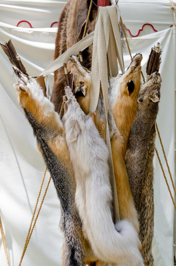 Fox pelts hang on a rack at a festival. Fox pelts hang on a rack for sale, at an outdoor Renascence festival. often used for trim for costumes and clothing from stock images